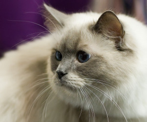 Image Source: Tomi Tapio K, Flickr, Creative Commons Cat show: Form Very nice nose.