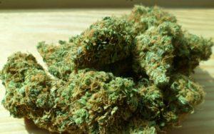 cannabis-448661_1920