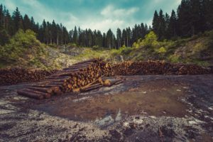 forestry-960806_1280